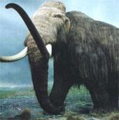 Phát hiện hóa thạch voi ma mút dọc bên bờ sông