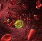 Người duy nhất thoát khỏi virus tử thần HIV là do đâu?