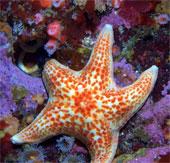 Tìm hiểu thế giới sao biển sặc sỡ sắc màu