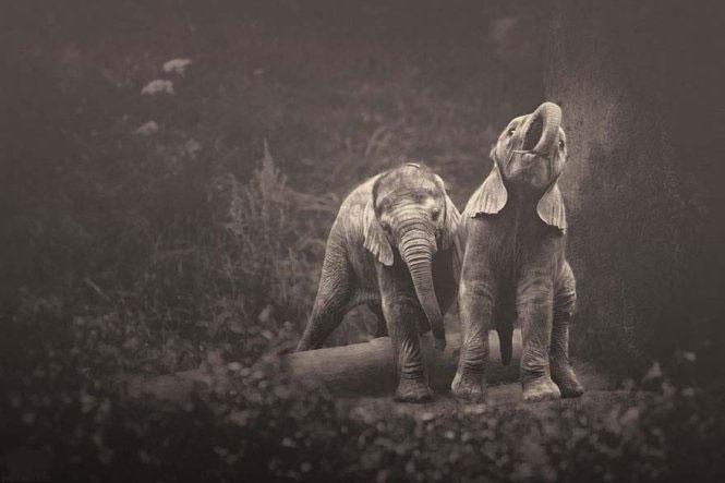 """Xúc động bộ ảnh """"biết nói"""" của những loài động vật"""