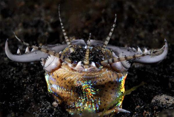 """Cận cảnh các """"quái vật"""" biển dị thường nhất thế giới"""