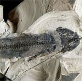 """Động vật có thể """"mọc lại chi"""" xuất hiện từ 300 triệu năm trước"""