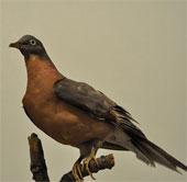 Tìm hiểu về sự tồn tại của đàn chim hàng tỷ con