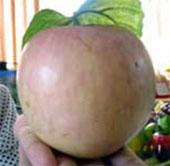 Mắt thường không thể phân biệt được trái cây có hóa chất