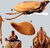 Phát hiện loài côn trùng mới ở miền bắc Việt Nam