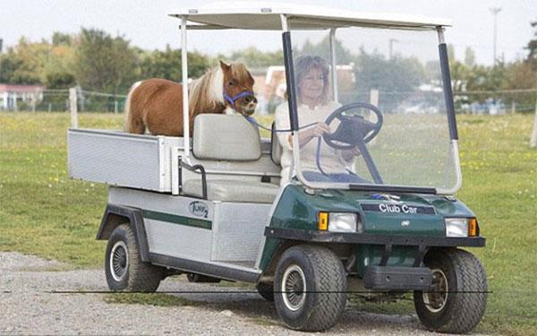 Chiêm ngưỡng con ngựa lùn chỉ cao ngang chó