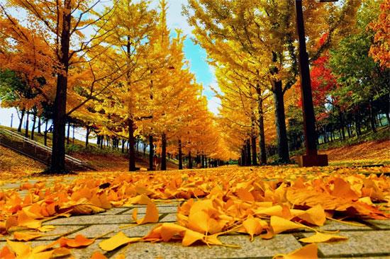 Vì sao mùa thu lá lại đổi màu? - KhoaHoc.tv
