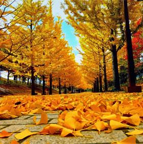Vì sao mùa thu lá lại đổi màu?