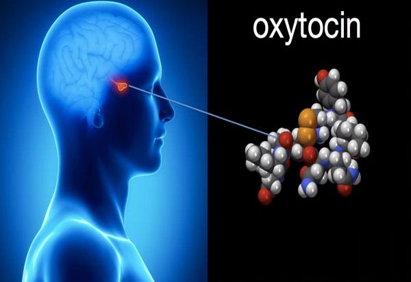 Tìm ra cách hormone oxytocin điều khiển hành vi tình dục