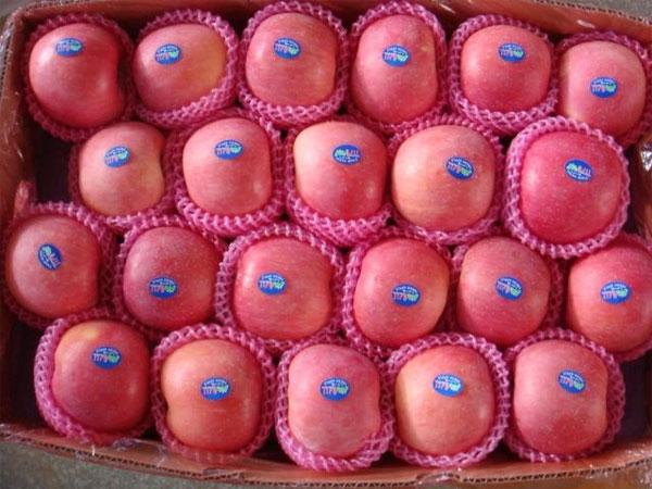 Táo Trung Quốc có màu phấn hồng, hồng nhạt, thường bọc trong lưới xốp.