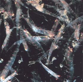 Nước tiểu động vật ảnh hưởng thành phần hóa học của nước biển