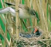 Chim tu hú - Bà mẹ bạc tình và đứa con sát thủ