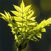 Thực vật tiêu thụ CO2 nhiều hơn chúng ta tưởng