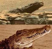 Cá sấu đã di cư lên sống trên sao Hỏa?