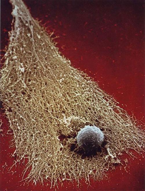 Cận cảnh hệ thống miễn dịch cơ thể người qua ảnh đẹp mắt