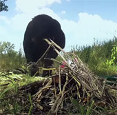Video: Tinh tinh nhóm lửa và nấu ăn như người