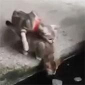 Video: Cá dưới hồ dọa mèo khiếp vía