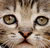 13 điều thú vị về ria mèo