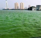 Nước hồ đổi màu vì tảo