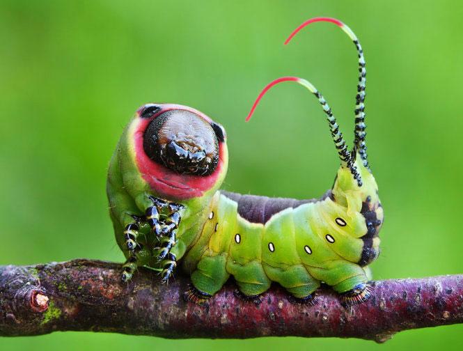 """Chùm ảnh sâu """"lột xác"""" thành bướm ngoạn mục"""