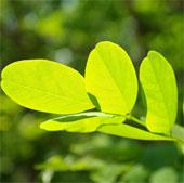 Kem chống nắng của các loài thực vật