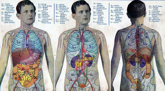 15 điều kỳ diệu về cơ thể con người