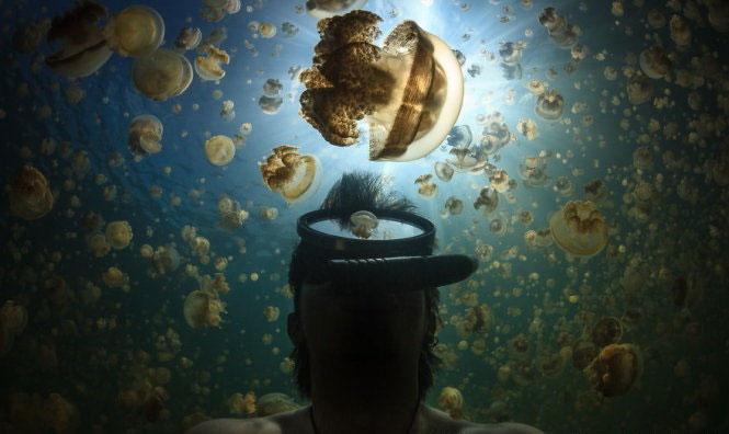 Đẹp lung linh vương quốc sứa
