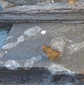Phát hiện dấu chân từ thời kỳ đồ đá 5000 năm trước