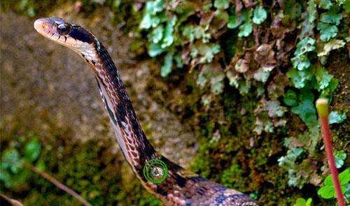 Vẻ đẹp của các loài rắn Việt Nam