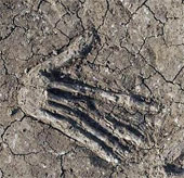 Tìm thấy 16 bàn tay phải bị chặt đứt, chôn vùi ở cung điện cổ xưa