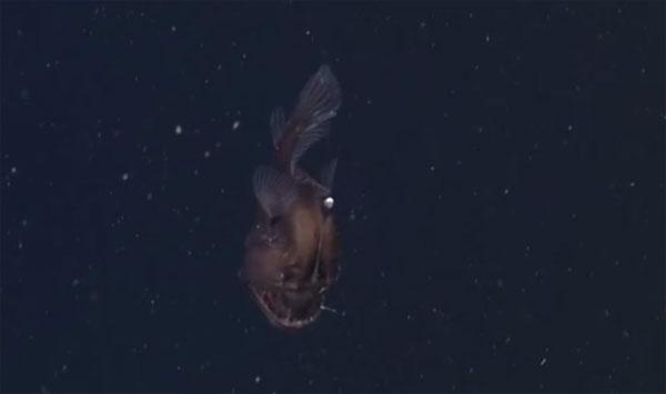 """Lần đầu tiên bắt được cá """"Quỷ biển đen"""""""