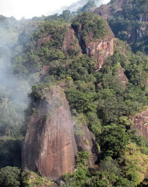 Lộ diện loài thông mới ở Việt Nam cả thế giới chưa biết