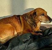 Chó đợi chủ suốt 2 năm ở viện