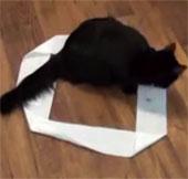 Video: Mèo thích ngồi trong vòng tròn