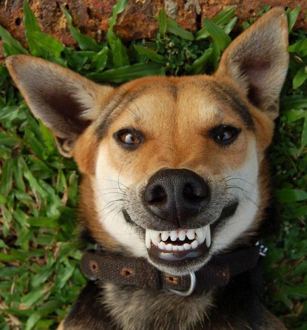 """Dấu hiệu giúp nhận biết """"cún cưng"""" ghét bạn"""