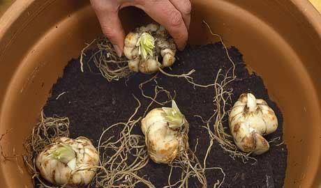 Nên chú ý bước chọn đất và trộn giá thể trong quy trình kỹ thuật trồng hoa