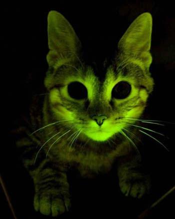 Những con mèo trong nghiên cứu khoa học