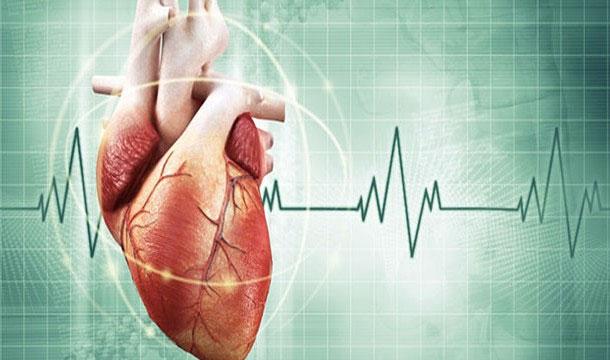 25 sự thật thú vị về trái tim của bạn