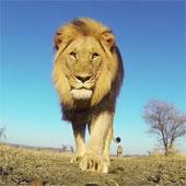 Video: ngắm mặt trời mọc từ miệng sư tử