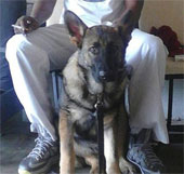Video: Chó chết vì chắn đạn cho chủ