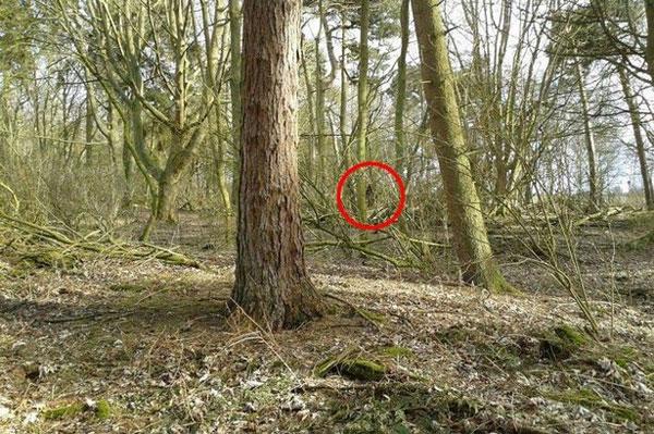 Sinh vật bí hiểm ẩn hiện trong rừng ở Anh