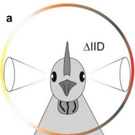 Lý do chim nghe tốt dù không có tai bên ngoài