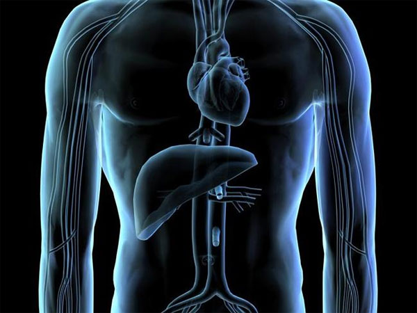 Gắn thành công cảm biến siêu nhỏ lên mô tim