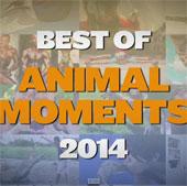 Video: Khoảnh khắc thế giới động vật ấn tượng nhất 2014