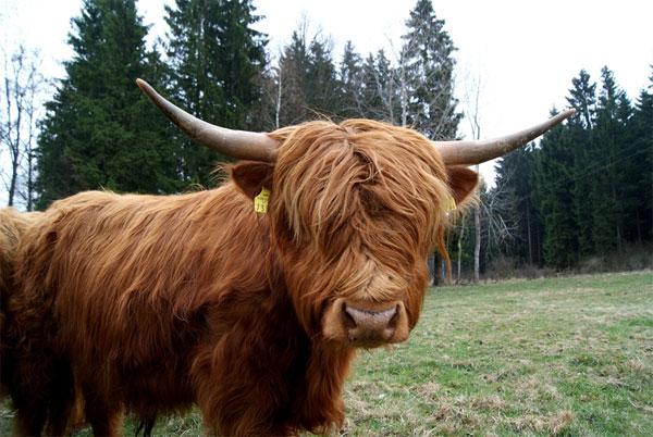 """8 loài động vật có """"bộ tóc"""" kỳ lạ"""