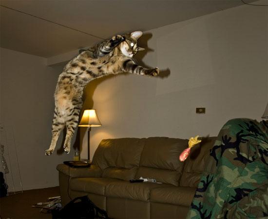 10 điều thú vị về mèo