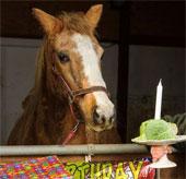 Con ngựa già nhất thế giới