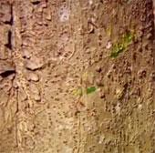 Video: Thử sức với cú cắn của kiến lửa có độc