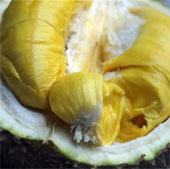 Ăn sầu riêng sau khi uống rượu: Cảnh báo ngộ độc