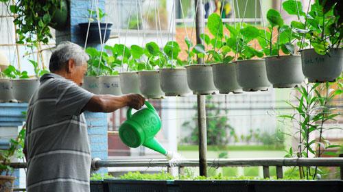 Cần chú trọng tưới nước trong kỹ thuật trồng cây, rau sạch tại nhà.